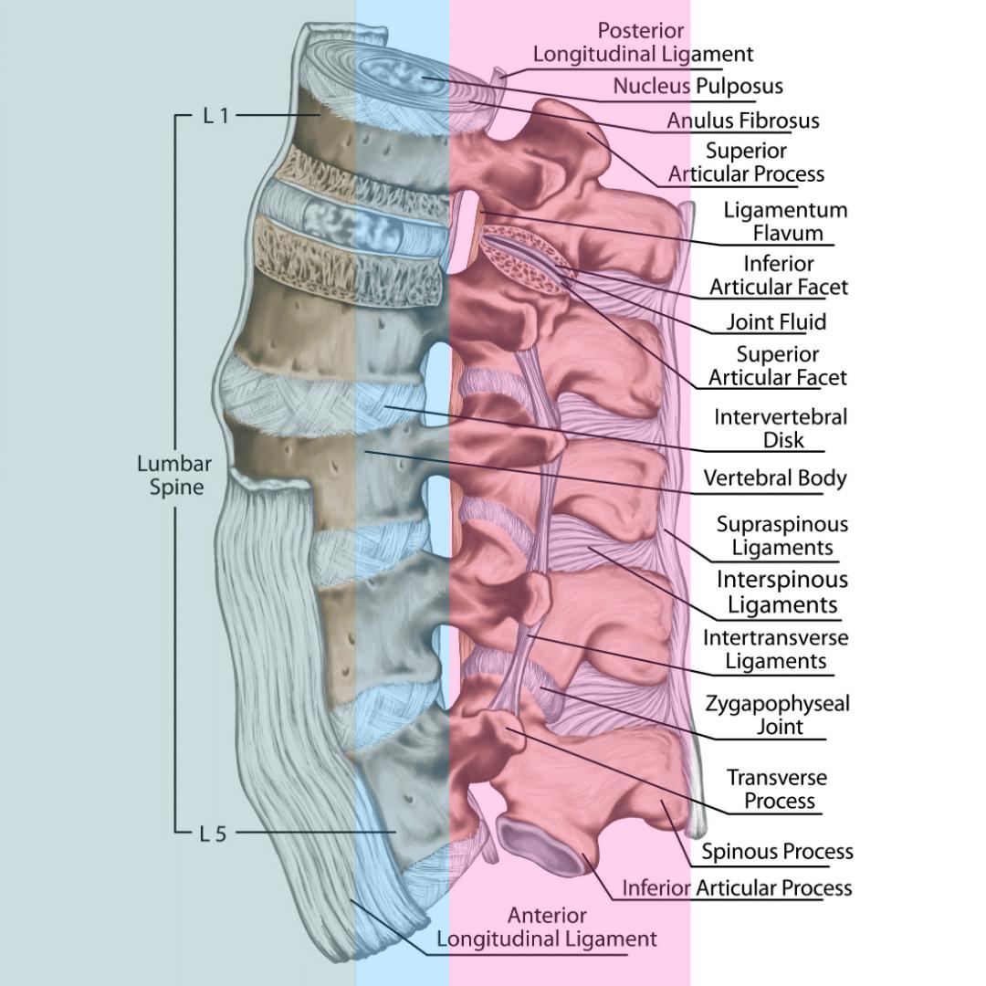 three columns of the lumbar spine